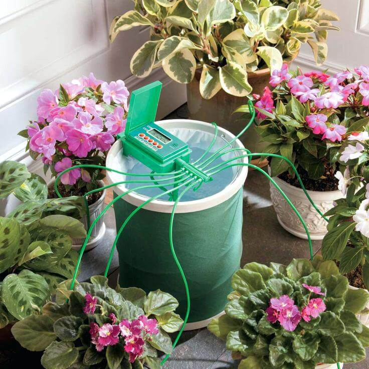 auto water system plants vs manual indoor